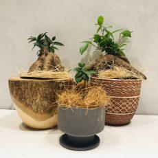 父の日おすすめギフト①~観葉植物編~